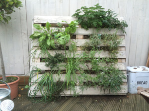 Liven up your garden with wall-mounted pallets